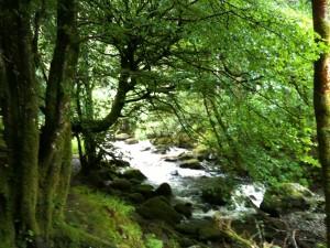 Wasserfall im Naturschutzgebiet: Die Kraft der Natur wird in Irland deutlich
